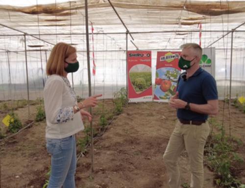 Shirudo y Milbeknock: acaricidas para control de vasates en tomate