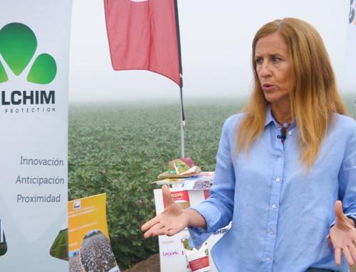 Sumando al cultivo del algodón